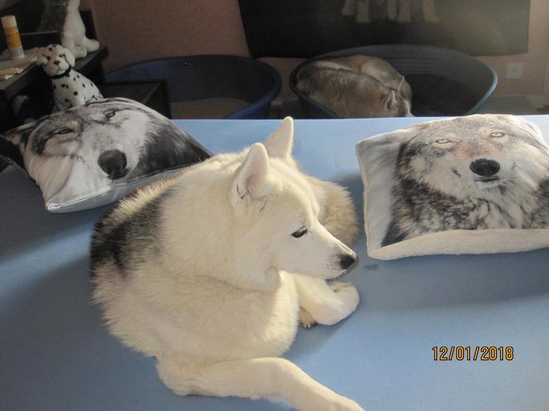 Saskia, Jiro, et leurs copains - Page 10 548