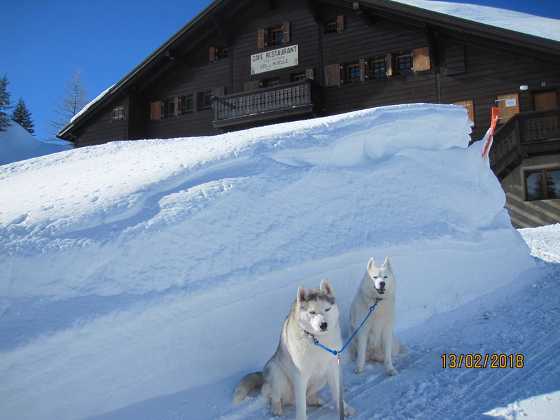 Saskia, Jiro, et leurs copains - Page 3 559