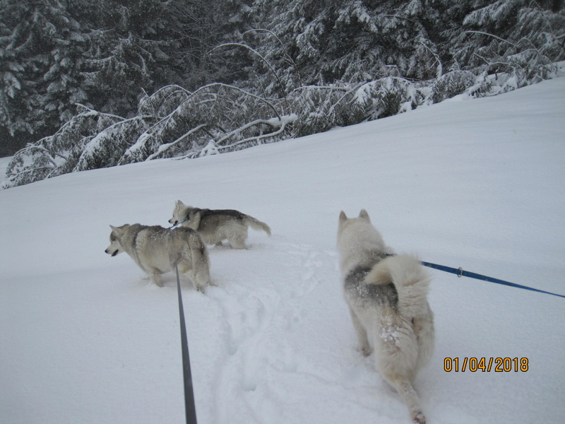 Saskia, Jiro, et leurs copains - Page 4 575