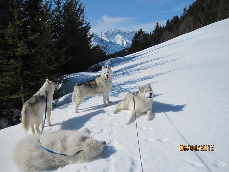Saskia, Jiro, et leurs copains - Page 16 576