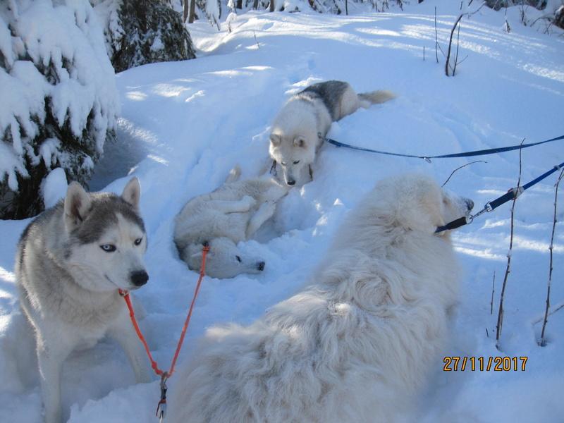 Saskia, Jiro, et leurs copains - Page 4 621
