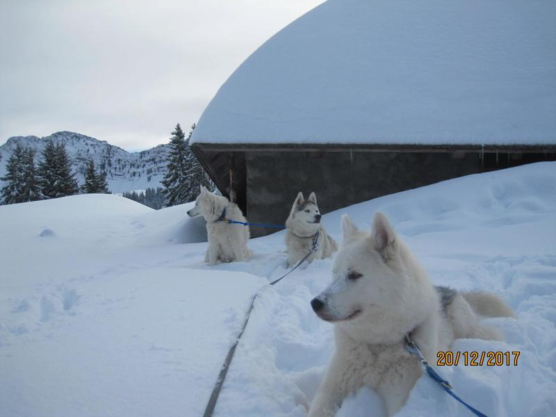 Saskia, Jiro, et leurs copains - Page 2 639