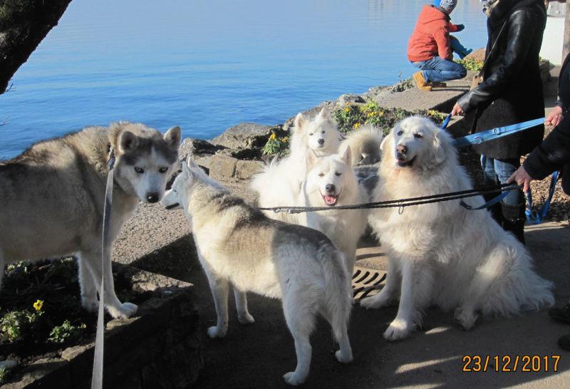 Saskia, Jiro, et leurs copains - Page 2 641