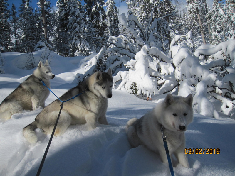 Saskia, Jiro, et leurs copains - Page 3 652