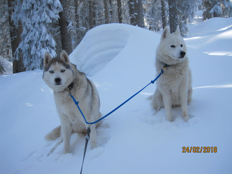 Saskia, Jiro, et leurs copains - Page 3 662