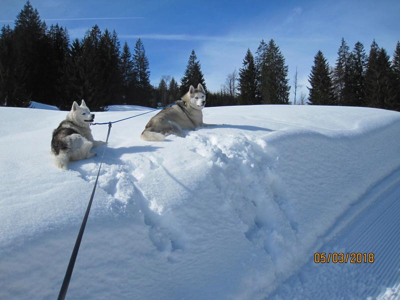 Saskia, Jiro, et leurs copains - Page 4 666