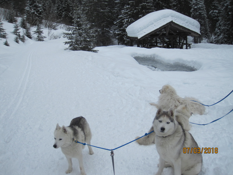 Saskia, Jiro, et leurs copains - Page 15 667
