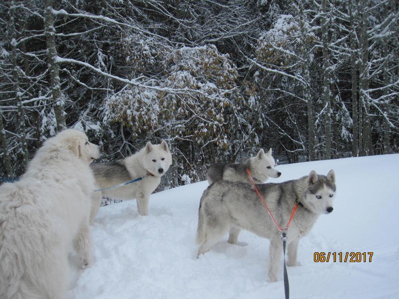 Saskia, Jiro, et leurs copains - Page 2 712