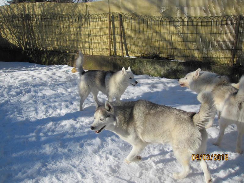 Saskia, Jiro, et leurs copains - Page 4 756