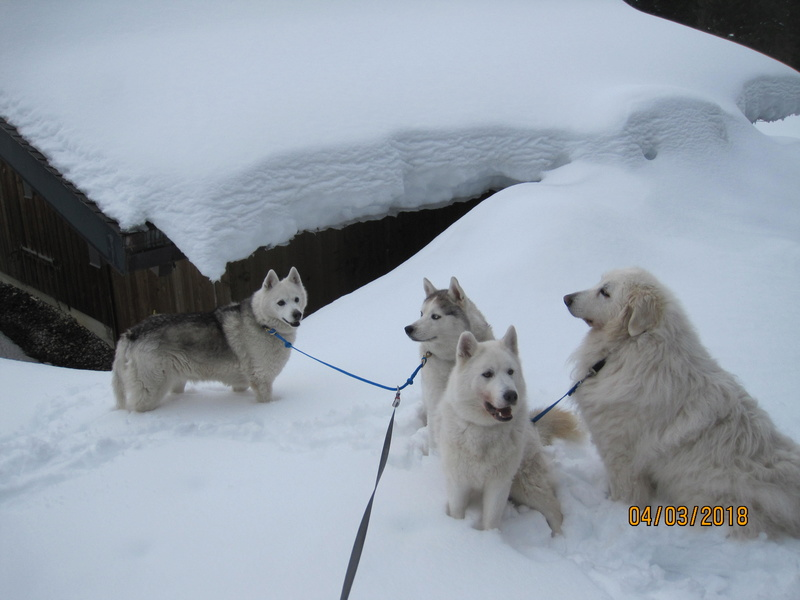 Saskia, Jiro, et leurs copains - Page 15 757