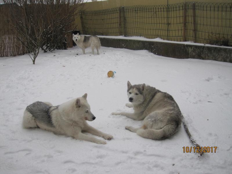 Saskia, Jiro, et leurs copains - Page 5 828