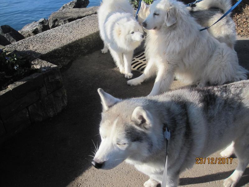 Saskia, Jiro, et leurs copains - Page 2 837