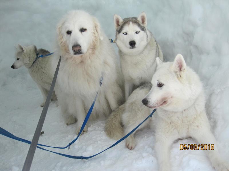 Saskia, Jiro, et leurs copains - Page 15 857