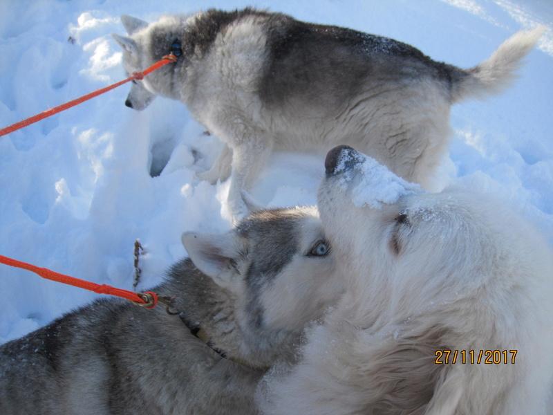 Saskia, Jiro, et leurs copains 918