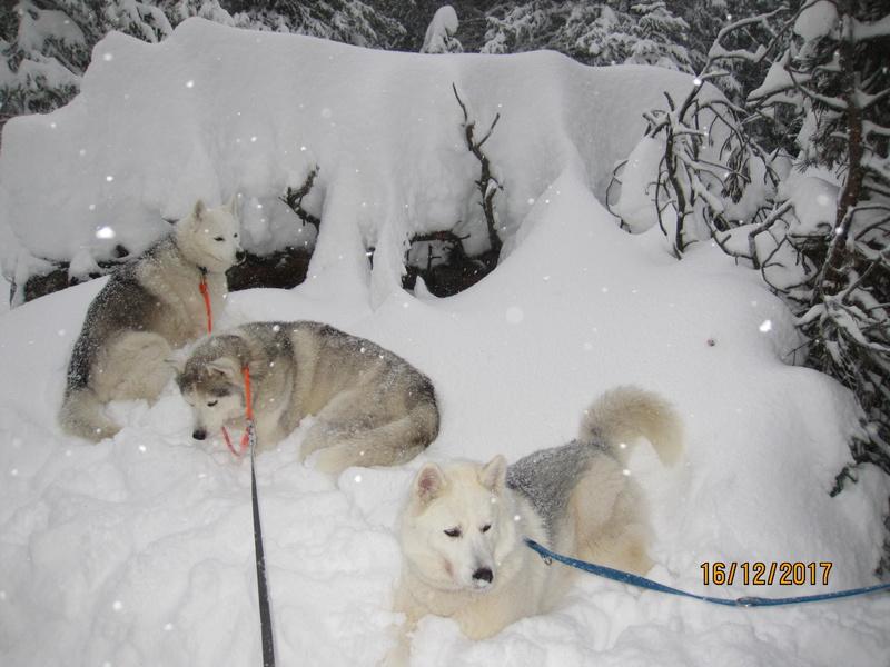Saskia, Jiro, et leurs copains - Page 2 933