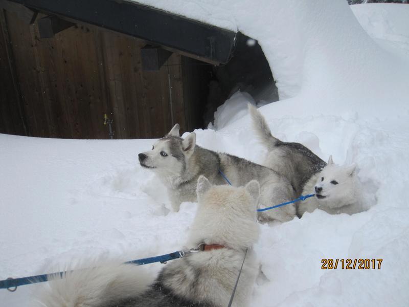 Saskia, Jiro, et leurs copains - Page 2 939