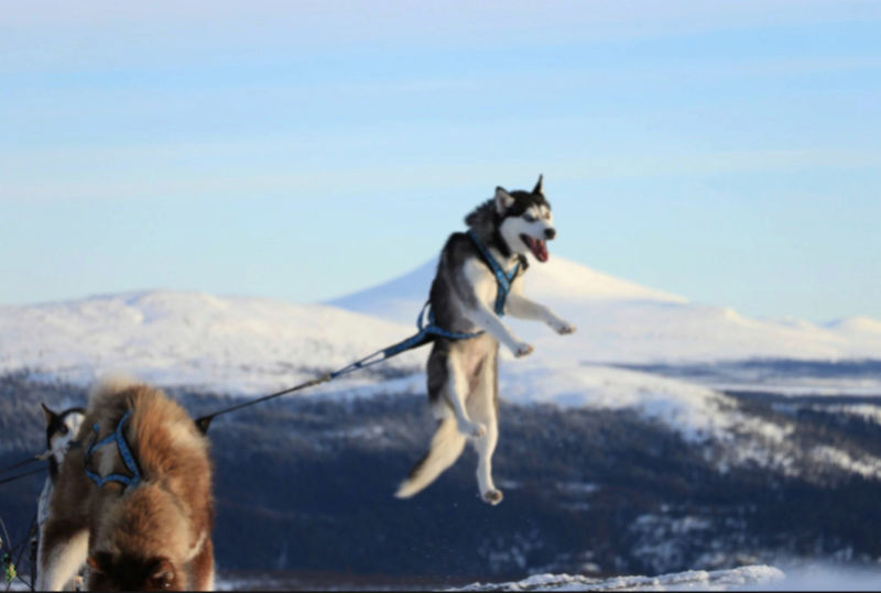 NORWAY TRAIL Captur23