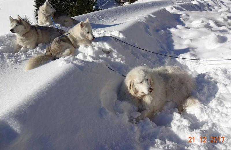Saskia, Jiro, et leurs copains - Page 2 Congee10