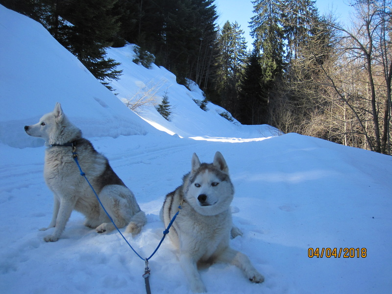Saskia, Jiro, et leurs copains - Page 4 Img_0311