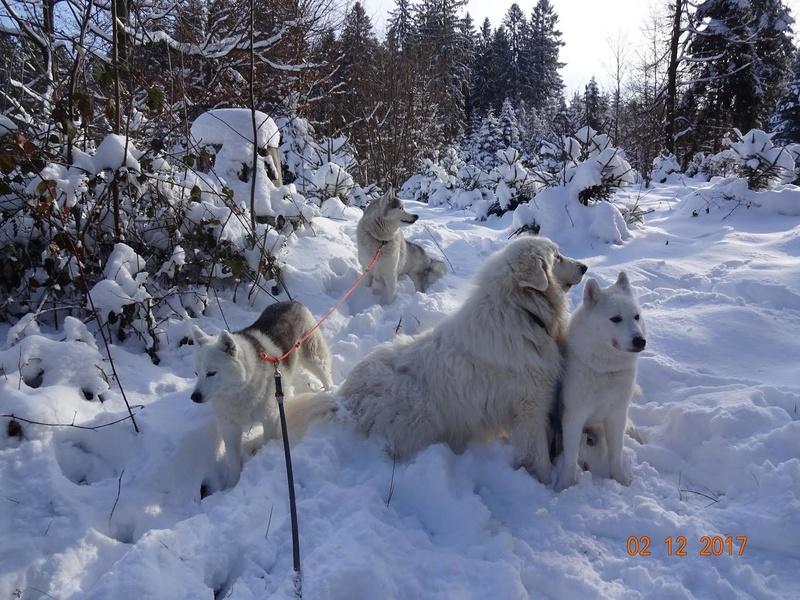Saskia, Jiro, et leurs copains - Page 4 La_pla10