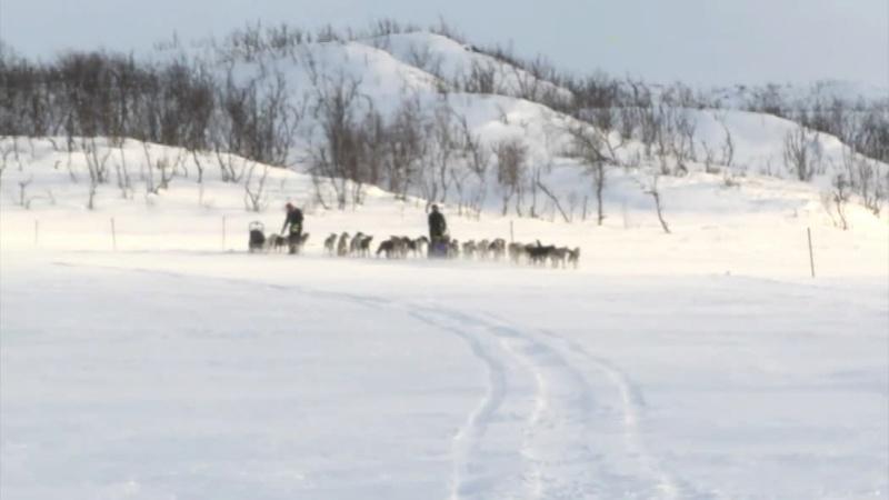 Finnmarklopet 2015 Wlcewx10