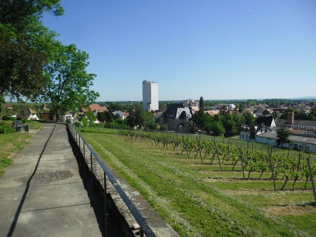 Die evangelische Bergkirche in Osthofen. Sam_8614