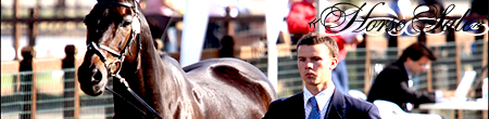 """Продажа/Покупка/Аренда лошадей в агентстве """"Horse Sale"""""""