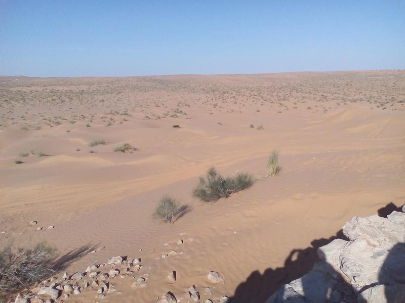 un paradis à la tunisienne Img_2016