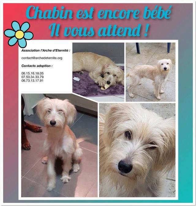 Week-End Adoption du 10 et 11 mars Chabin31