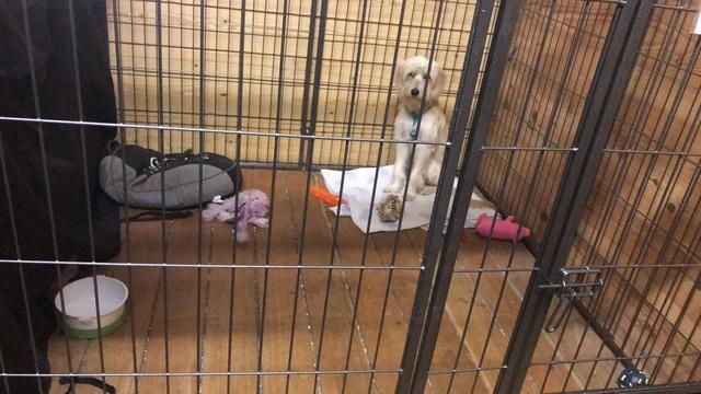 Week-End Adoption du 10 et 11 mars Img-2108