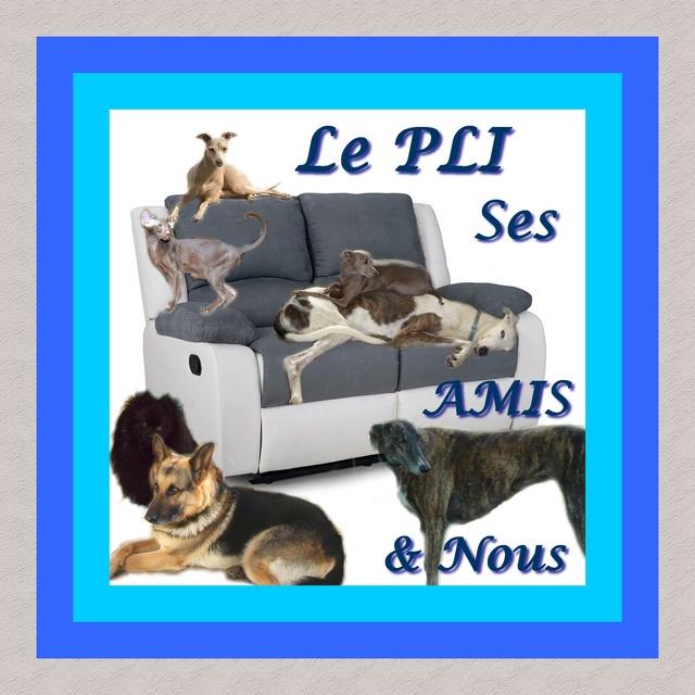 Le PLI, ses amis & nous Forum_11