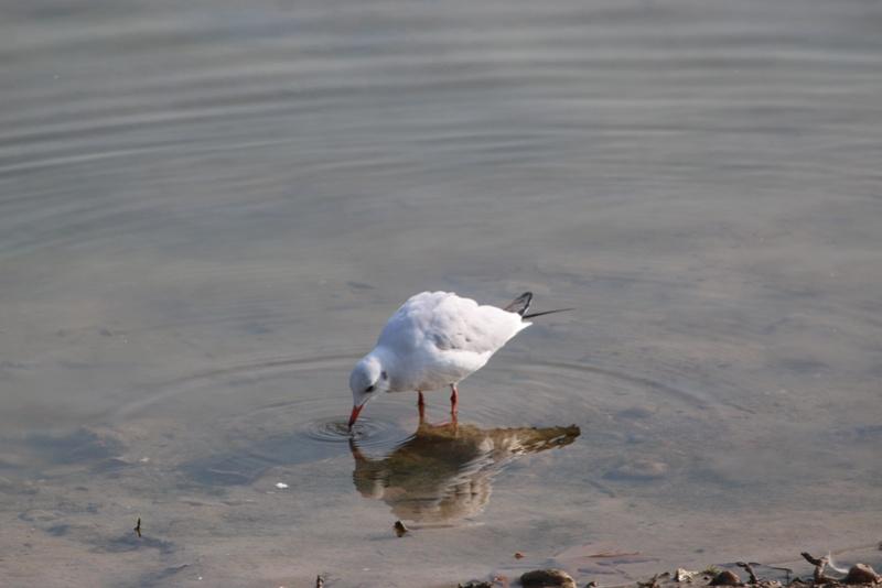 Quelques photos d'oiseaux. Img_1610