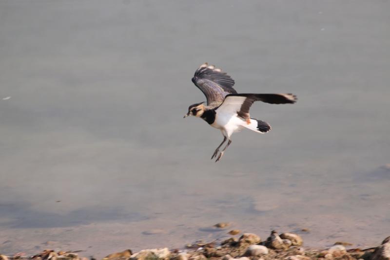 Quelques photos d'oiseaux. Img_1710