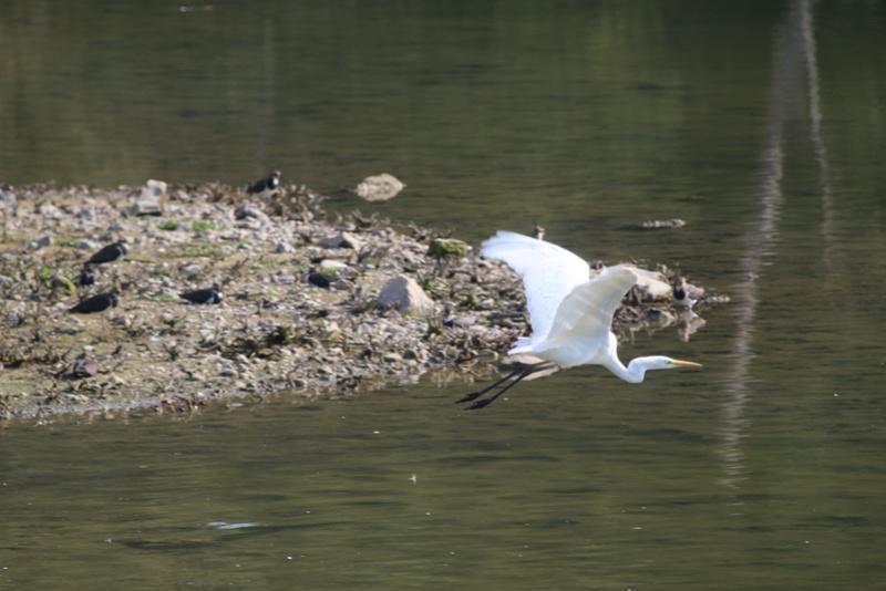 Quelques photos d'oiseaux. Img_1711