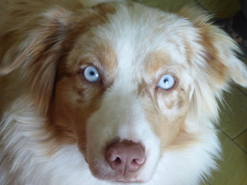 Un chien aux yeux extraordinaires Mina_l10