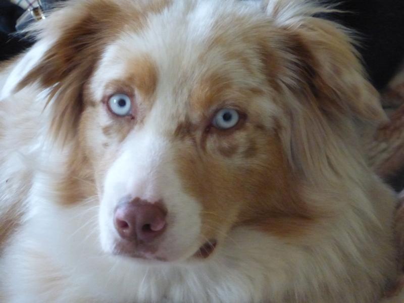 Un chien aux yeux extraordinaires Mina_l11