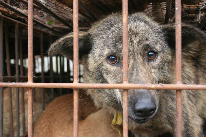 Защитим животных! - Страница 3 Caged-10