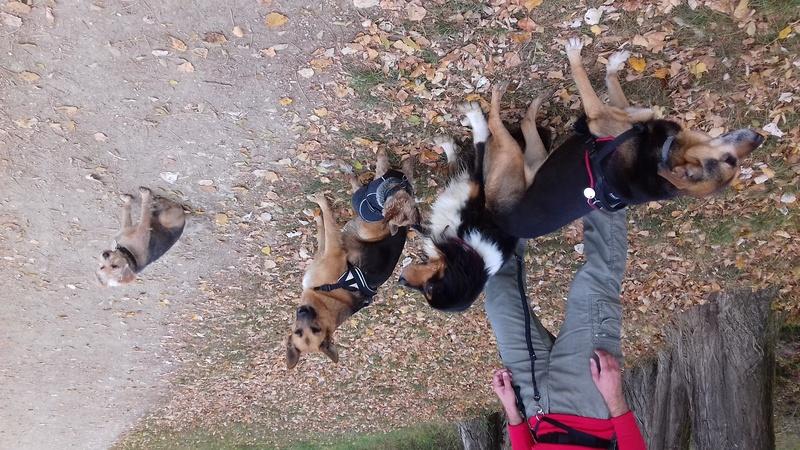 Balades canines: Pays de Gex/Jura/Genève ou Albertville (73) - Page 7 20171111