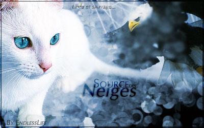 Nuage d'Azur ~ Tigre ~ Mâle {LIBRE} Source11