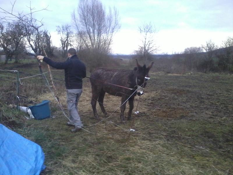 Iroquois, l'âne imprévu ^^ - Page 2 2018-045