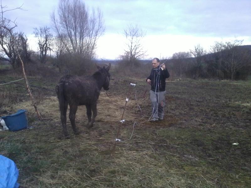 Iroquois, l'âne imprévu ^^ - Page 2 2018-047
