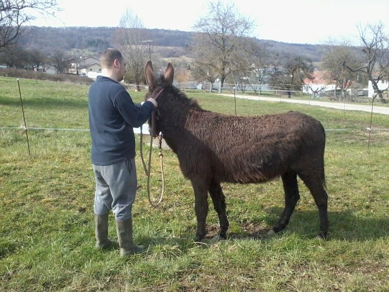 Iroquois, l'âne imprévu ^^ - Page 2 2018-081