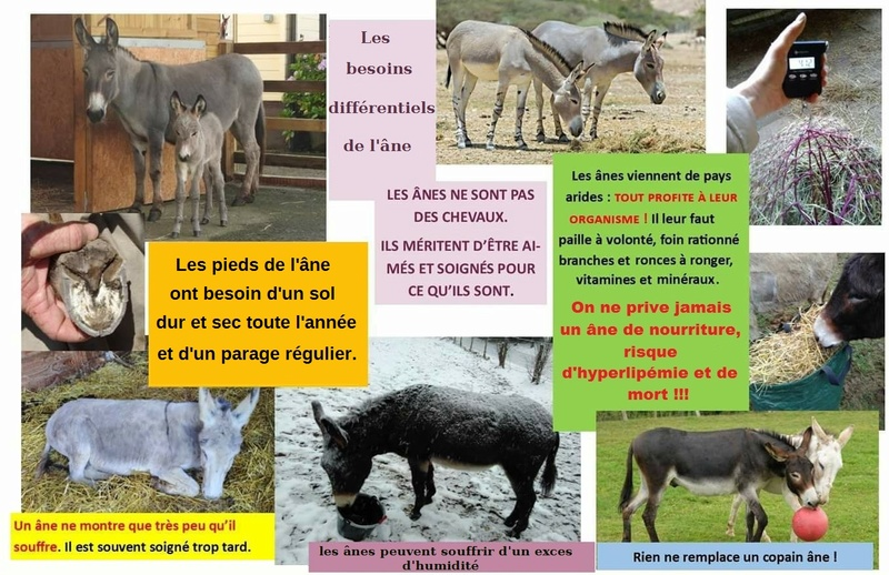 différence âne/cheval - Page 3 28618711