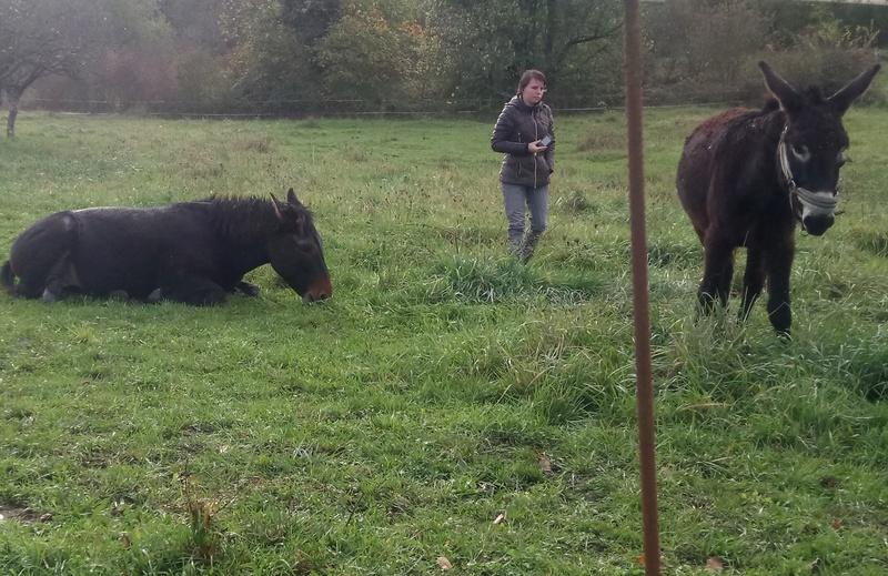 Iroquois, l'âne imprévu ^^ Dsc_0019