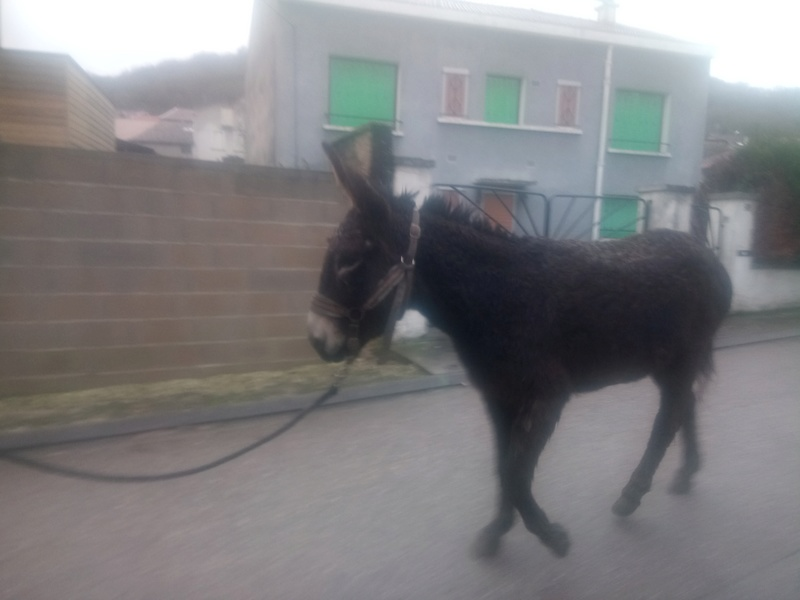 Iroquois, l'âne imprévu ^^ Dsc_0032