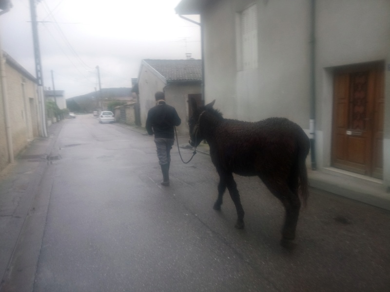 Iroquois, l'âne imprévu ^^ Dsc_0033