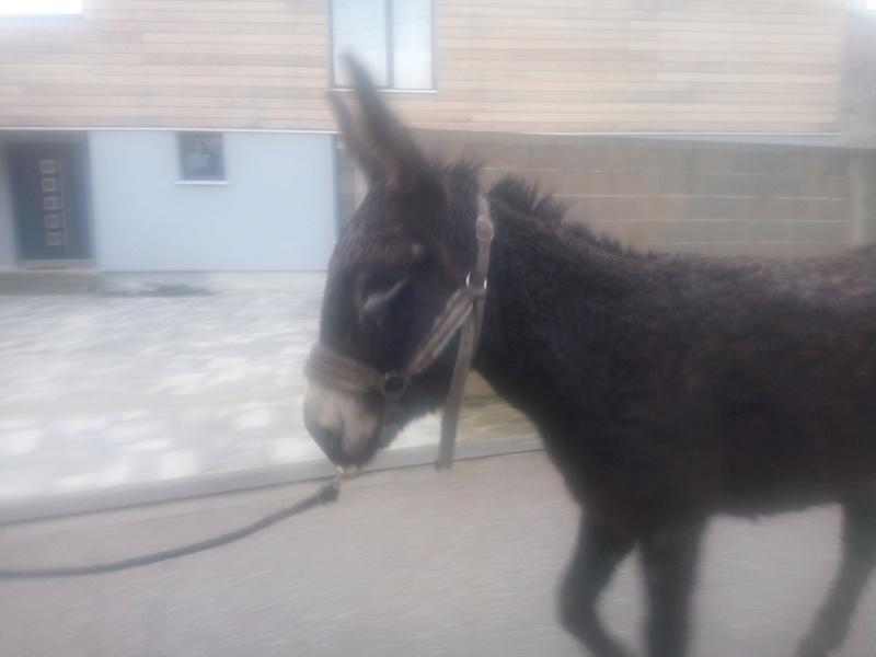 Iroquois, l'âne imprévu ^^ Dsc_0117