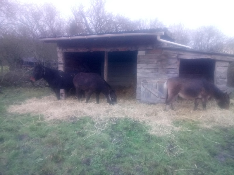Iroquois, l'âne imprévu ^^ Dsc_0118