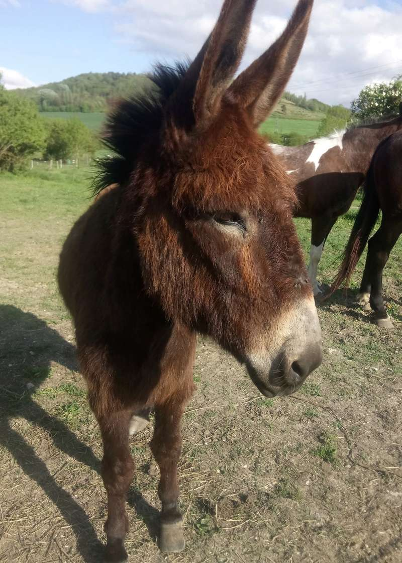 parage ane, mulet, bardot, chevaux - Page 5 Iro10