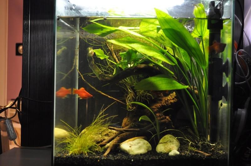 Mes aquariums Dsc_0036